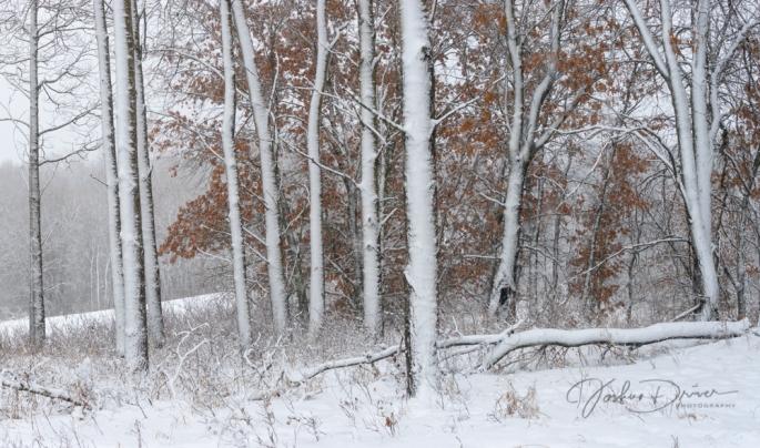 Winter Pillars