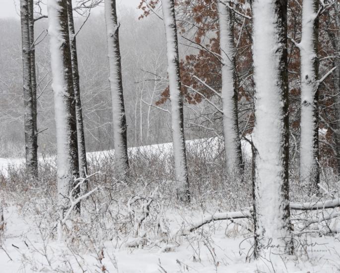 Winter Pillars (2)
